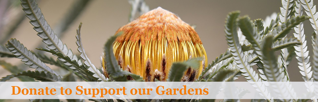 Donate to support our gardens